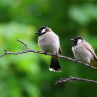 animal-photography-birds-branch-110812