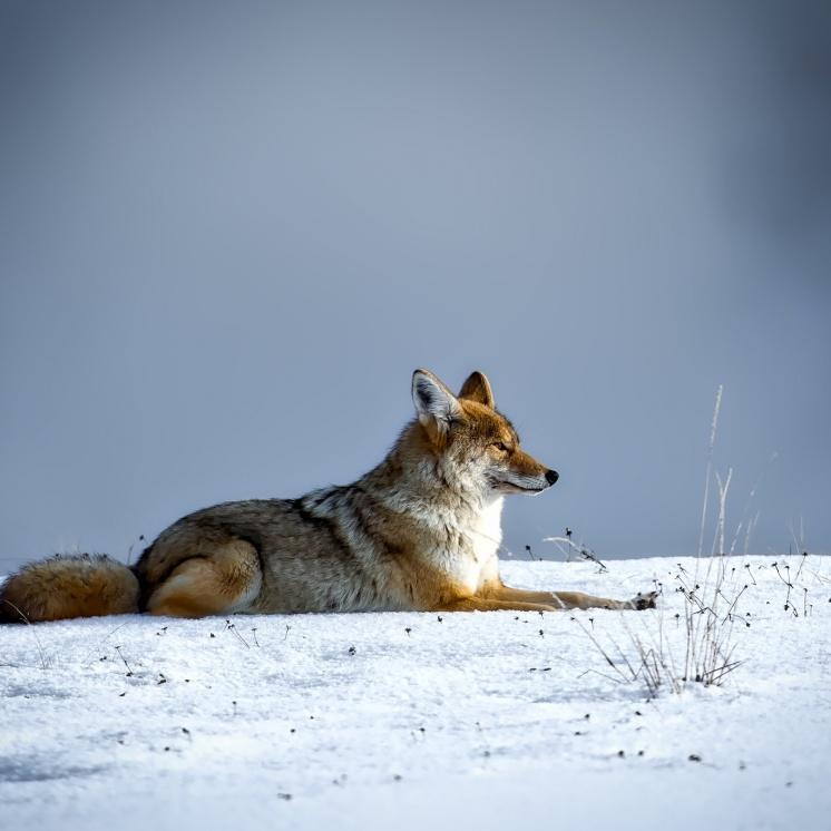 animal-canine-cold-206828